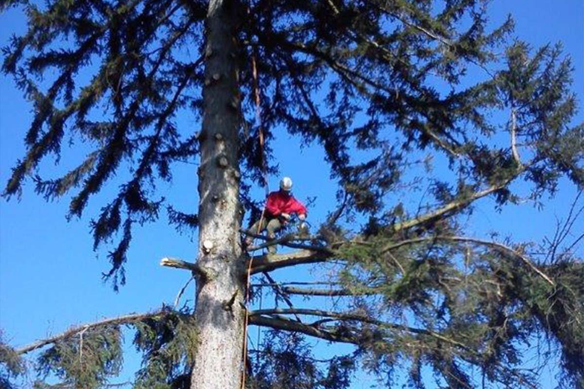KEISH Výrub a ošetrenie stromov