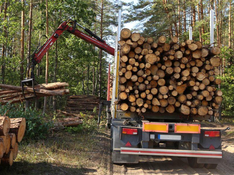 Lesné práce, výrub stromov | KEISH